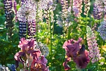 Floweriness