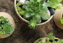 flowerpots - my work / kytka, zahrada, příroda, keramika