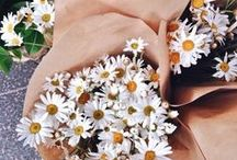florals / take time to stop and smell the flowers