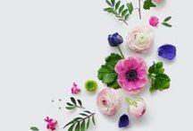 Plants & Flowers & Blooms