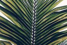 cool plants / I like green things too