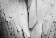ingel / angel