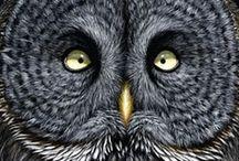 öökullid / owls