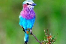 South African Birds / South Africa has approximately 965 bird species, many of which are endemic, rare and just plain beautiful.