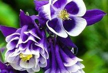 Flower I Like / by Josephine Chan