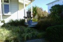 IJLA - New Zealand Natives / Landscape Architecture
