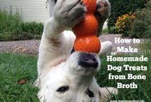 Pets and Healthy Pet Food / Natural pet care and natural pet food