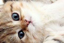 Cats! / Cute-Cats!