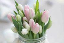 Fiori / il nostro allestimento floreale