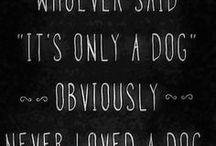 Hunde Sprüche / #Zitate #Quotes #Sprüche #Lebensweisheiten