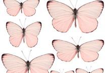 nature draw&print&more