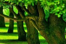 Favorite Places & Nature