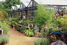Green Fingers | Dream Plant Nursery / Ideas and inspiration for a little nursery that perhaps one day I will run?