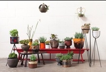 PLANTS // GREEN THINGS / #plants #houseplants #gardening #planters / by Heather Lou