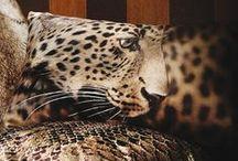 | ANIMAUX | / Inspiration animalière pour décoration originale. Partez à la découverte de la faune et de flore delamaison !