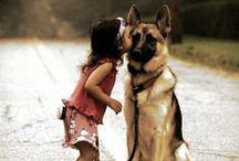P U P P I E S / All things dogs <3