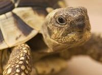 Turtle house