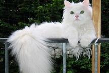 Gatti Nel Mondo | Cats World / Fotografie e illustrazioni dei gatti più simpatici  -  Photos and illustrations of cute cats.