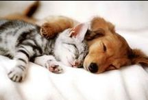 Cutest animals EVER / go on...fall in love...