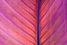 Kleur - Color