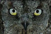 Owls / For my (slight) obsession with owls