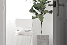 HOME STYLING Plants