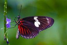 Vlinders / butterflies / by Antoinette Kuhlmann