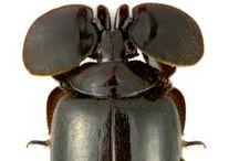 Insectarium / by Lizzie Bennet