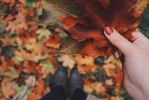 Automne  / Fall / Promenons-nous dans les bois à la découverte d'une nature aux couleurs singulières !