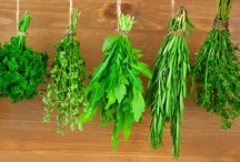 """VIDEOS: Herbs / """"Gardener's Corner"""" YouTube videos produced by University of Illinois Extension."""