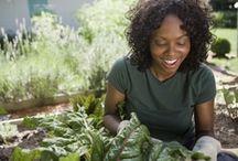 "VIDEOS: Gardening 101  / ""Gardener's Corner"" YouTube videos produced by University of Illinois Extension."