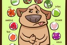 Pets & Animals / Information and tips for keeping your pets healthy, as well as interacting with wildlife.