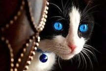 Magnificent Majestic Felines / The most indefinable indominatable spirits of the animal world
