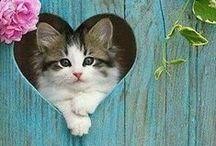 Cute Kittens / Sweet babies of the feline variety
