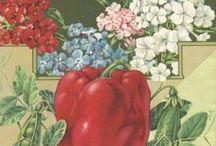 Historical Gardening