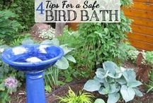 Birdy Tips & Tricks / Helpful tips and tricks for getting birds to your feeders/yard