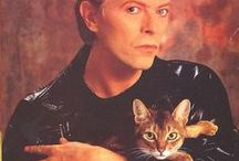 Celebs with their cats