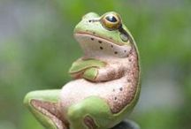 Froggy went a Courtin' ,He did Go ,Ahem! / Froggs