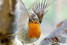 vogeltjes