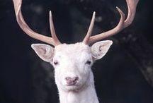 { albinism: animals }