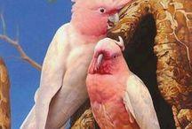 { animals: birds }