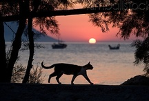 Greek Island Cats / Cats of Greece, by Corfu2travel.com