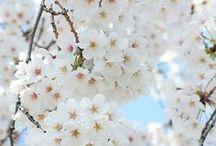 ××× Spring ×××