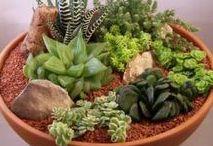 Desert florariums
