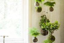 Décorations plantes