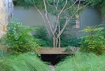 David Rolston drought tolerant plants / zeriscaping