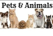 ❤ Pets & Animals / Cute and fuzzy puppies, kittens, dogs, cats, and ALL pets and animals - we LOVE them all large and small.  Pictures, tips, products, buying guides, DIY ideas, care and training tips and more - lots of funny animal stuff, too.