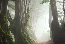 Forest - Trees - Animals