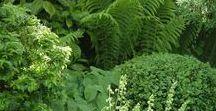 Garden in the shade
