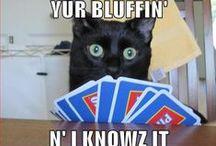 Lol-cats i like